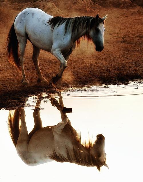 horsemirror0